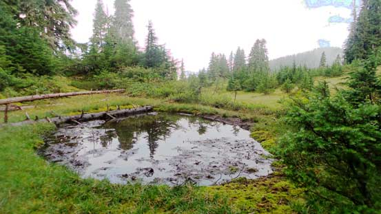 A little tarn along the way. Not many mosquitoes around though which was good...