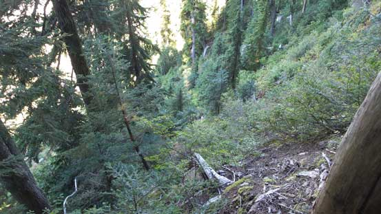The typical steep and bushy terrain in this general area...