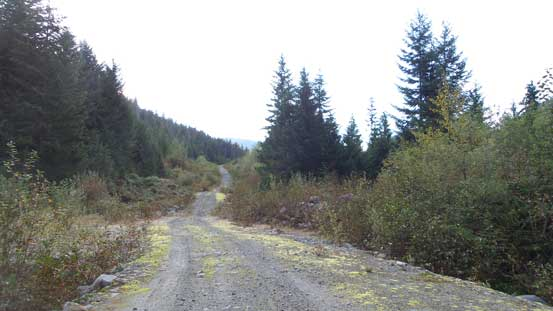 The initial stretch of logging road plod. Should have driven a little bit further.