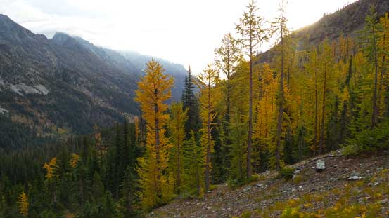 The larches were on!