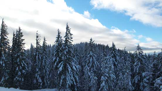 Looking back at the forested true summit